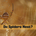 Do Spiders Nest?
