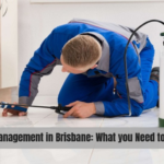 Pest Management in Brisbane: What you Need to Know