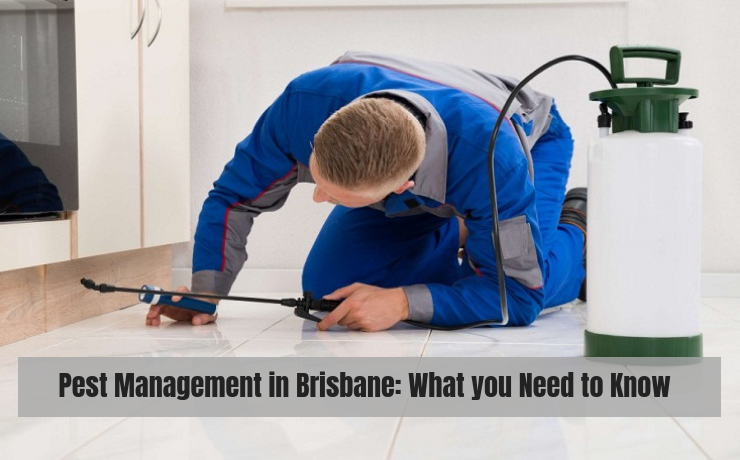 Pest Management in Brisbane