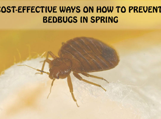 bed bug pest control